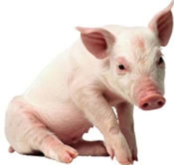 PIG_May%202009-thumb-350x332